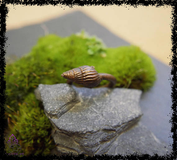 sea shell copper ring 5a21b30b - Sea Shell Copper Ring